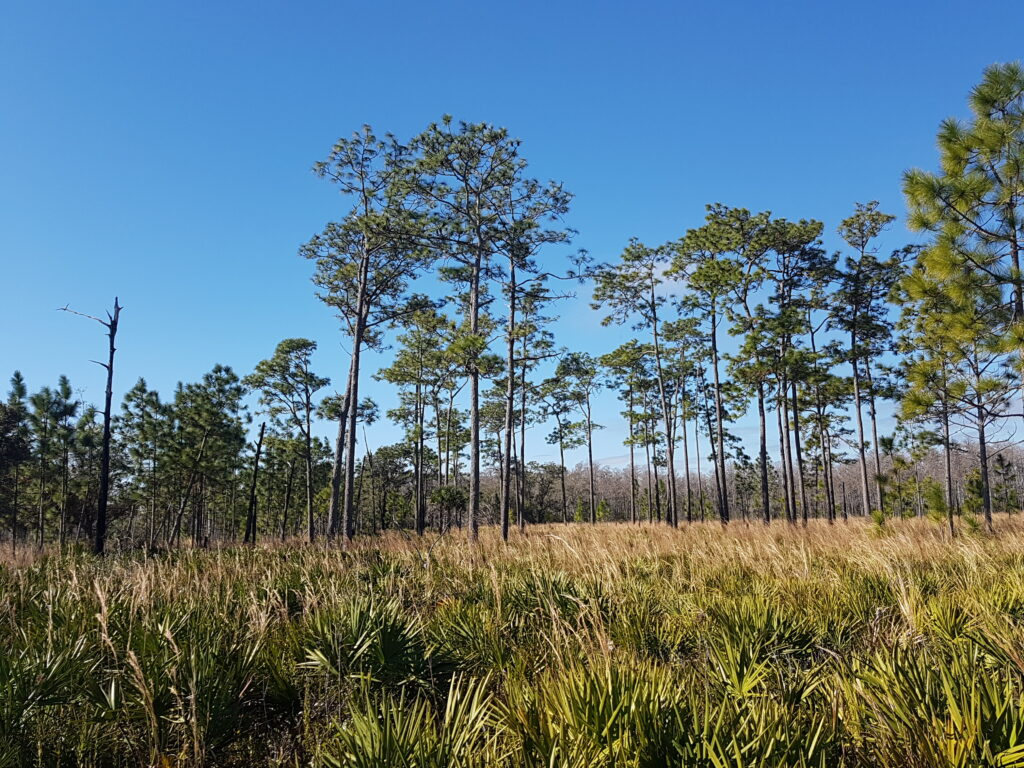 The Disney Wilderness Preserve