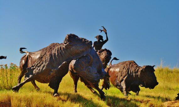 Tatanka: Story of the Bison